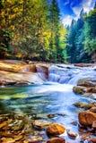 piękna leśna wodospadu Obraz Royalty Free