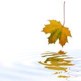piękna liści jesienią Zdjęcie Royalty Free