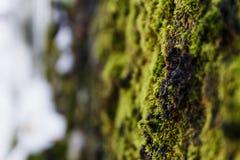 Piękna liszaj zieleń zdjęcie stock
