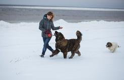 Piękna młoda kobieta i dwa szczeniaka biega na zimie wyrzucać na brzeg Romantyczni wakacje przy dennym wybrzeżem Zdjęcie Stock