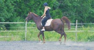 Piękna młoda kobieta jedzie jej arabskiego konia przy gospodarstwem rolnym zbiory wideo