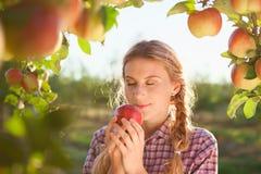 Piękna młoda kobieta podnosi dojrzałych organicznie jabłka zdjęcia royalty free