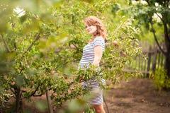 Piękna młoda kobieta w ciąży pozycja w lecie w jabłczanym sadzie i łasowań jabłkach fotografia royalty free