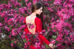 Piękna młoda kobieta w eleganckiej czerwieni smokingowy pozować Fotografia Stock