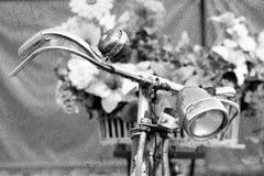 Piękna młoda modlenie modliszka - modliszki religiosa Obraz Royalty Free