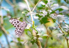 Piękna Mała Drewniana boginka w motylim parku obraz stock