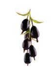 Piękna makro- fotografia dojrzały, smakowity czarny rodzynek, odizolowywający na białym tle Wyśmienicie i zdrowy czarny rodzynek Zdjęcia Stock