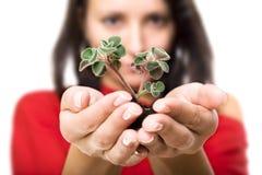 piękna mienia rośliny kobiety potomstwa zdjęcie royalty free