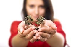 piękna mienia rośliny kobiety potomstwa Zdjęcia Stock