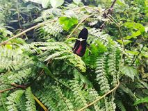 Piękna motylia pozycja wokoło rośliien zdjęcia stock