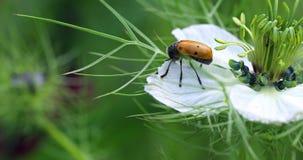 Piękna mrówki torby ściga