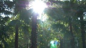 Piękna natura dżungli drzewka palmowego lasowy świeży ulistnienie pod jaskrawym słońcem tropikalny klimat 4K zbiory
