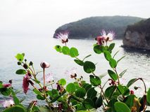 Piękna natura denny wybrzeże Fotografia Royalty Free
