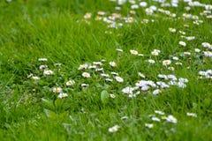 Piękna natura, kwiaty w wiośnie Zdjęcie Stock