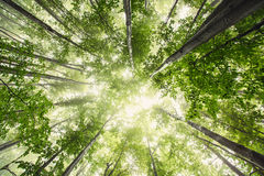 Piękna natura przy rankiem w mglistym wiosna lesie z słońcem zdjęcie stock