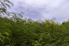Piękna natura z drzewem i zieleń liściem Obrazy Stock