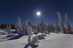 Piękna natury i krajobrazu fotografia Szwecja Scandinavia przy zimną zimy nocą zdjęcie royalty free