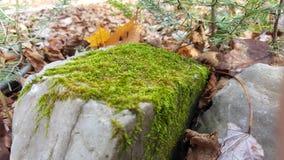 piękna natury osobliwość zakorzenia drzewa Zdjęcie Royalty Free