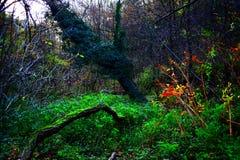 piękna natury osobliwość zakorzenia drzewa Zdjęcie Stock