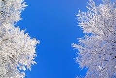 piękna natury zima Zdjęcia Royalty Free