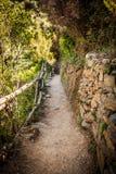 Piękna nieociosana średniowieczna ścieżka w bujny zieleni drewnach Obraz Stock