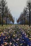 Piękna obfitolistna droga z nagimi drzewami zdjęcie stock