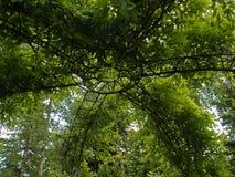 piękna ogródu zieleni pergola fotografia royalty free
