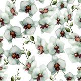 Piękna orchidea flower6 ilustracji