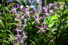 Piękna orchidea w rośliny pepinierze Zdjęcia Royalty Free