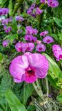 Piękna orchidea wymieniał Dendrobium rodziny wśród kwiatu ogródu fotografia royalty free