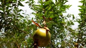 Piękna owoc zdjęcie stock