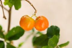 Piękna owoc gotowa podnoszącym w górę obrazy royalty free