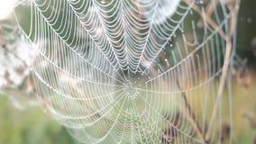 Piękna pajęczyna Dekorująca Z kroplami rosy kiwanie w wiatrze w wczesnym poranku Naturalny tło zdjęcie wideo