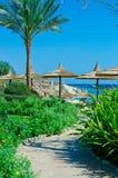 Piękna palmy plaża, morze i niebieskie niebo. Rasa Sid Um Obrazy Stock