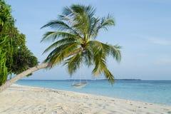 Piękna palmy plaża w Maldives Zdjęcie Royalty Free