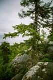 Piękna panorama jezioro i las od Kola parka narodowego osiąga szczyt Obraz Royalty Free