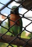 Piękna papuga W stalowej klatce fotografia royalty free