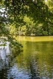 Piękna parkowa scena z gazonem, drzewami i wodą, obrazy stock