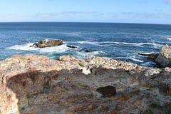 Piękna plaża w Hermanus z ślicznym dassie obsiadaniem na skale w Południowa Afryka Obrazy Stock