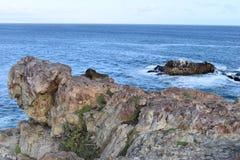 Piękna plaża w Hermanus z ślicznym dassie obsiadaniem na skale w Południowa Afryka Obraz Stock