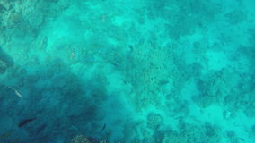 Piękna podwodna klamerka zdjęcie wideo