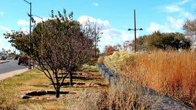 Piękna Pomarańczowa trawa Fotografia Royalty Free