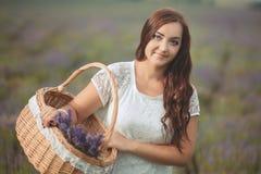 Piękna Provence kobieta relaksuje w lawendy pola dopatrywaniu na zmierzchu mienia koszu z lavanda kwitnie serifs Nęcąca dziewczyn Zdjęcia Royalty Free