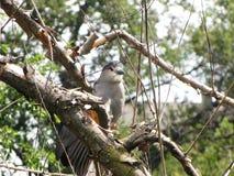 Piękna ptasia pozycja na gałąź drzewo Fotografia Royalty Free
