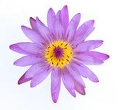 Piękna purpura waterlily, lotosowy kwiat lub odizolowywamy na białych półdupkach Fotografia Royalty Free