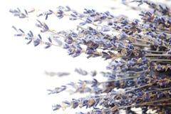 Piękna purpurowa lawenda na białym tle Fotografia Stock