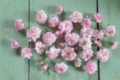 piękna różową różę Zdjęcia Stock