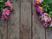 Piękna różowa leluja kwitnie tło dla urodziny, Macierzysty ` s dzień, walentynki ` s dzień, Marzec 8, Poślubia pojęcia kartka z p Zdjęcia Royalty Free