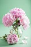 Piękna różowa peonia kwitnie bukiet w wazie fotografia royalty free