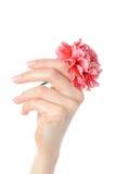 Piękna ręka, piękny francuski manicure, kwiat Zdjęcie Royalty Free